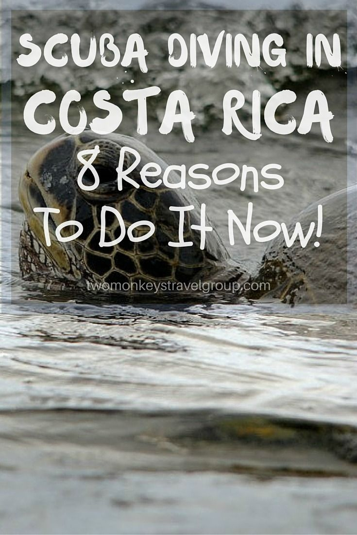 SCUBA DIVING IN COSTA RICA - 8 REASONS TO DO IT NOW! Of all the popular dive locations in the world, there is one that doesn't receive the same amount of hype and attention as the rest and yet it has so much more to offer – SCUBA Diving in Costa Rica will open your eyes to a whole new level of underwater exploration. #ScubaDiving #CostaRica #TwoMonkeysTravelGroup