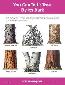 Fee printables re: identifying trees by bark, leaves, etc.
