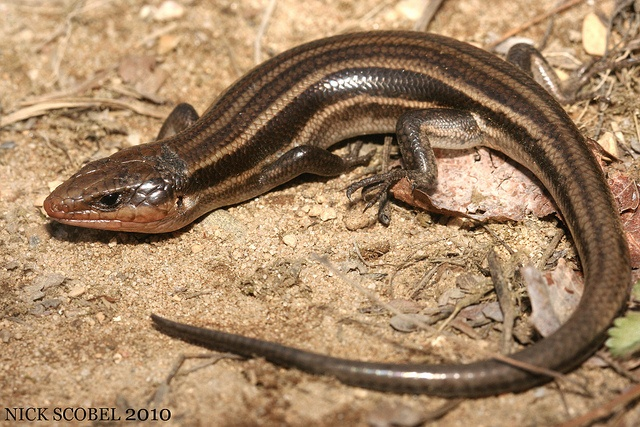 Identified one of these in Brown County, Indiana || Five-lined ...