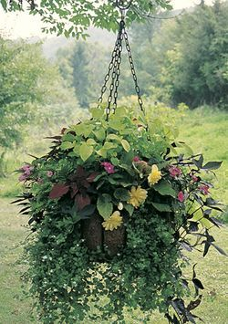 Needing ideas for Fall hanging baskets for the front porch.  This might be a keeper!