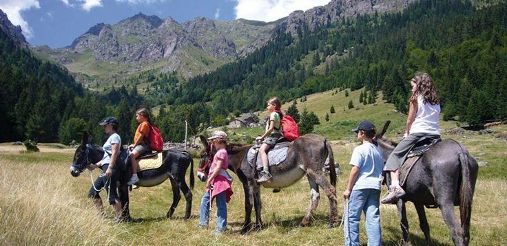 Presso l'Agriturismo d'Alpe Ferdy vi sono 20 asinelli normalmente utilizzati per la pulizia dei boschi e dei prati e che,Read more »