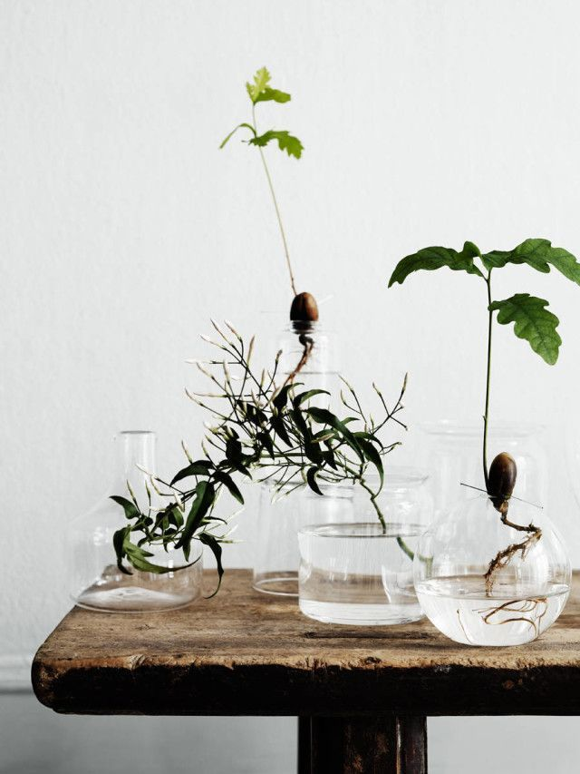 Create a simple little display of trees in glass vases to brighten up your apartment and give it some fresh air.