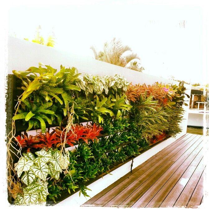 bromeliad wall south florida subtropical climate zone 9