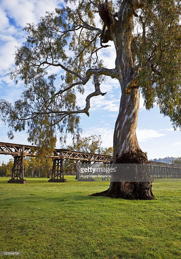 Stock Photo : Historic railway trestle bridge over the Murrumbidgee river floodplain at Gundagai, New South Wales, Australia