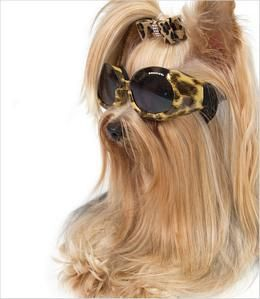Muppet needs some doggles!