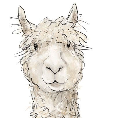 Alpaca illustration, The Border Mill