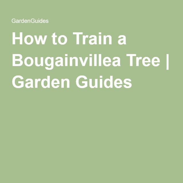 How to Train a Bougainvillea Tree | Garden Guides                                                                                                                                                                                 More                                                                                                                                                                                 More