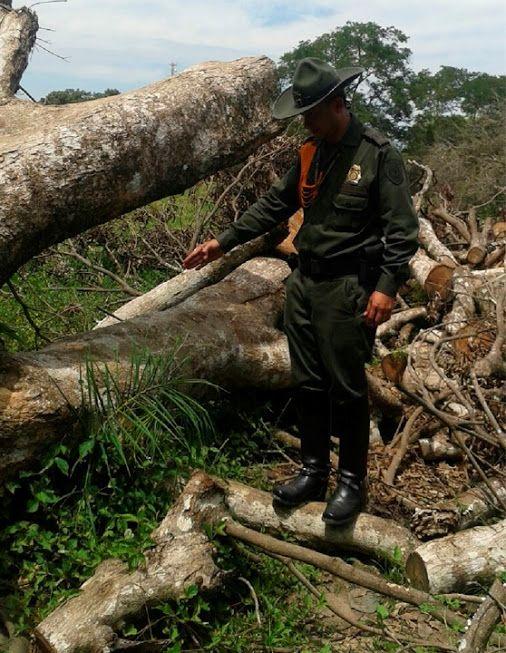 Patrullamos las zonas rurales para prevenir la comisión de delitos ambientales. Una tala indiscriminada puedo evitarse en el departamento del #Meta POLICIA DE COLOMBIA - Google+