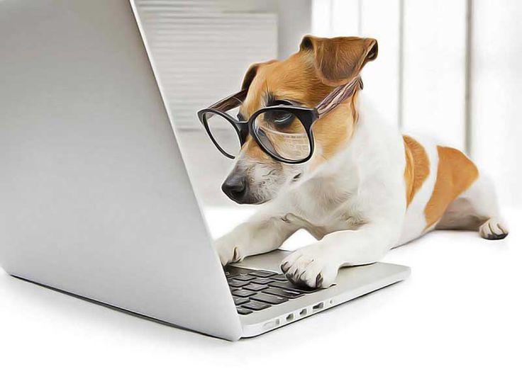 Mon chien est-il intelligent ? Pour le savoir, essayez ce test de QI rapide. Comment tester le QI de son chien ? Une méthode ludique et amusante à faire.