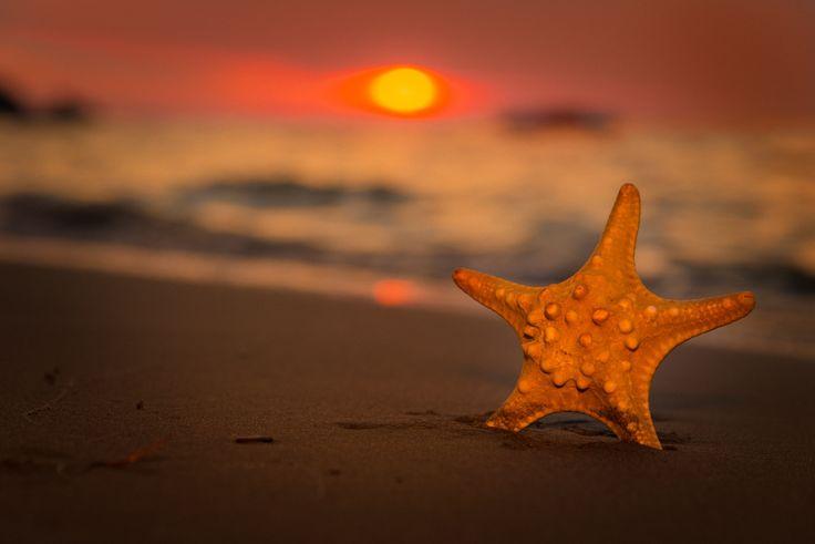 Se ti piace, nascere al tramonto, puoi dormire, insieme a me..  Stella marina Lorenzo damiani 500px