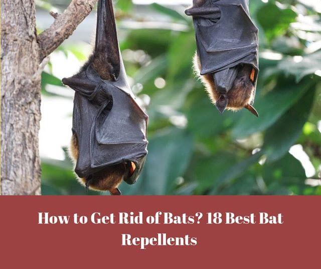 How To Get Rid Of Bats 18 Best Bat Repellents Getting Rid Of Bats Bat Repellent Bat Deterrent
