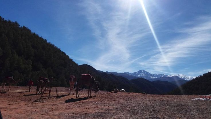 One of those mornings when the gentle rays of sun are scattering their shiny particles over the luxuriant Ourika Valley...  http://www.morocco-objectif.com/  #moroccoobjectif #ourika #ourikavalley #cameltrek #trek #africa #culture #marrakech #marrakesh #redcity #ochrecity #colors #nature #nomad #berber #amazigh #life #traditions #instatravel #instadaily #travel #instapassport #morocco #maroc #marruecos #marocco #marrocos #marokko #travelgram #traveltheworld  Marrakech day trips