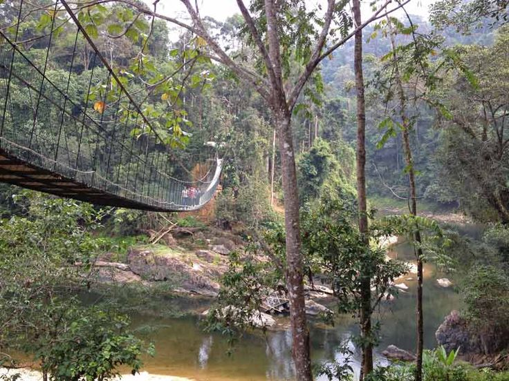 Lake Kenyir, Kelah Sanctuary. Canopy walk a part of the hiking trail.
