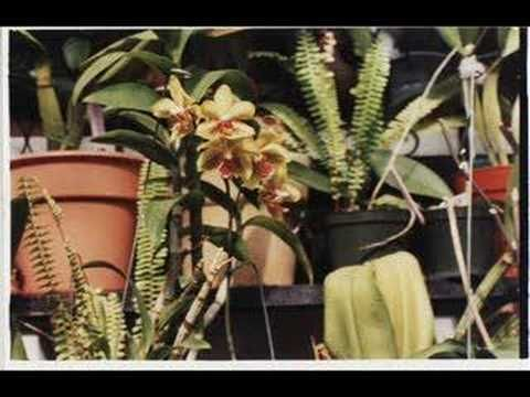 El paraiso de las orquideas como cuidar una orquidea - Como cuidar una orquidea en casa ...