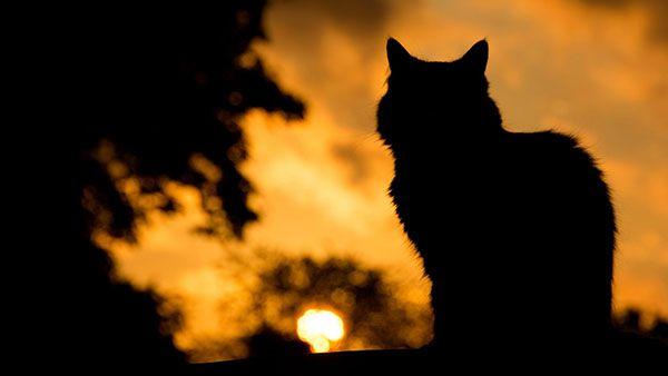 تحميل 100 صورة خلفيات قطط رائعة وعالية الدقة مداد الجليد Pics Of Cute Cats Cat Wallpaper Cute Cat Wallpaper