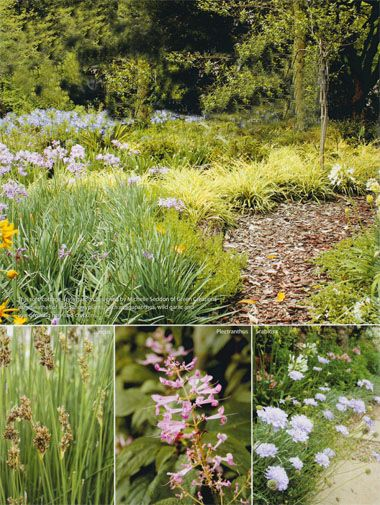 This soft, cottage-style garden designed by Michelle Seddon of Green Creations uses swathes of indigenous plants, such as agapanthus, wild garlic and low-growing hen-and-chickens.