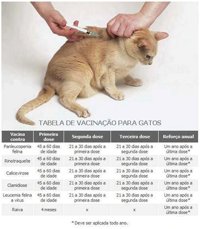 Como os bebês, os filhotes de cães e gatos tamb ém precisam ser vacinados e tomar vermífugos. E a preocupação deve ser a mesma: obser...