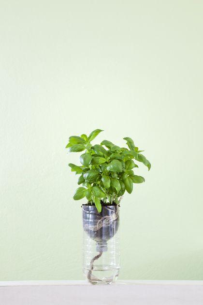 Handig, een automatisch water systeem voor een kruidenplantje in een petfles! Watering herbs in a soda bottle