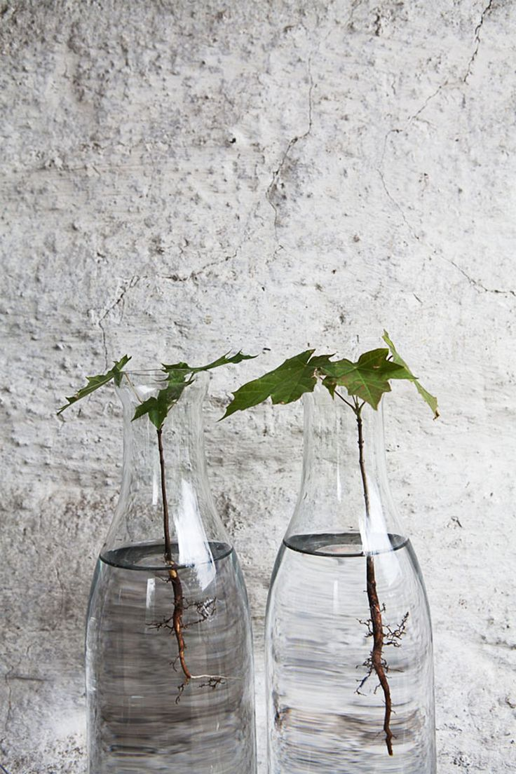 79 best water plants images on pinterest house plants indoor 79 best water plants images on pinterest house plants indoor plants and aquatic plants reviewsmspy