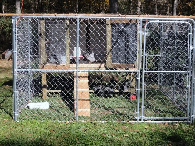 Chain link kennel run coops dog and farming for Chicken run for 6 chickens