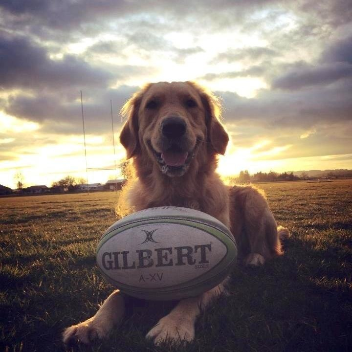....rugby & ... dog!
