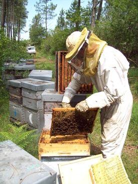 Quand les abeilles ont le bourdon...(rediffusion) / France Inter