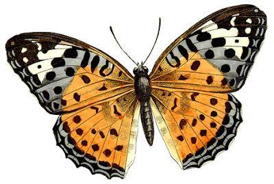 Images d'autrefois: Images anciennes papillons