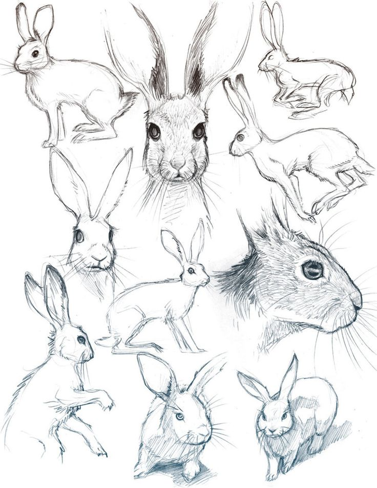 Bunny Sketches by *HeidiArnhold on deviantART