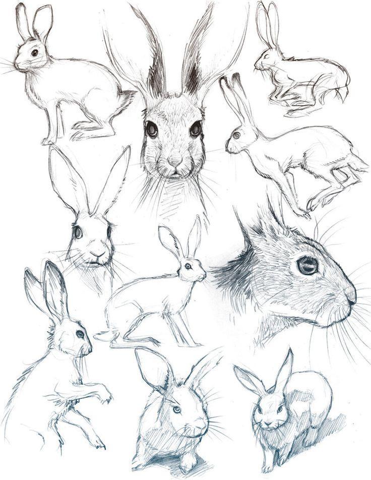 Bunny Sketches by *HeidiArnhold on deviantART