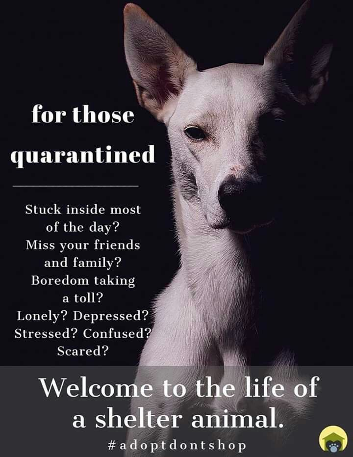 Pin By Janice Mombie On Animals In 2020 Dog Adoption Quotes Animal Adoption Quotes Dog Quotes Love