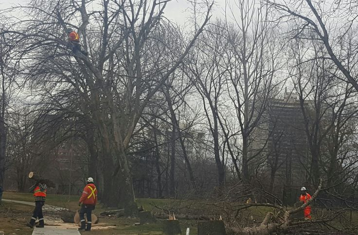 An arborist is by definition a tree surgeon. Tree Services Offer Tree Removal, Planting. What is The Differences Between Tree Service Compains in The GTA.