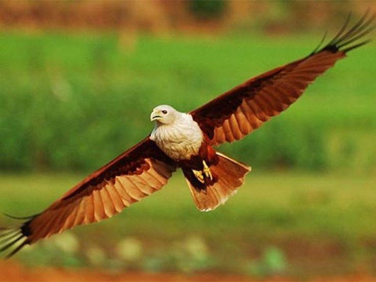 Mangalavanam Bird Sanctuary - in Kerala, India