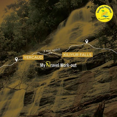 An uphill battle of 3 km to Kiliyur Falls from #Yercaud is bound to be a roving experience. Get your adrenaline rushing while you trek over the unpaved steep highway. The gushing waterfall at the end of your journey is a sight to behold. #trekking #travel #yercaud #vacation #trek #sterlingholidays