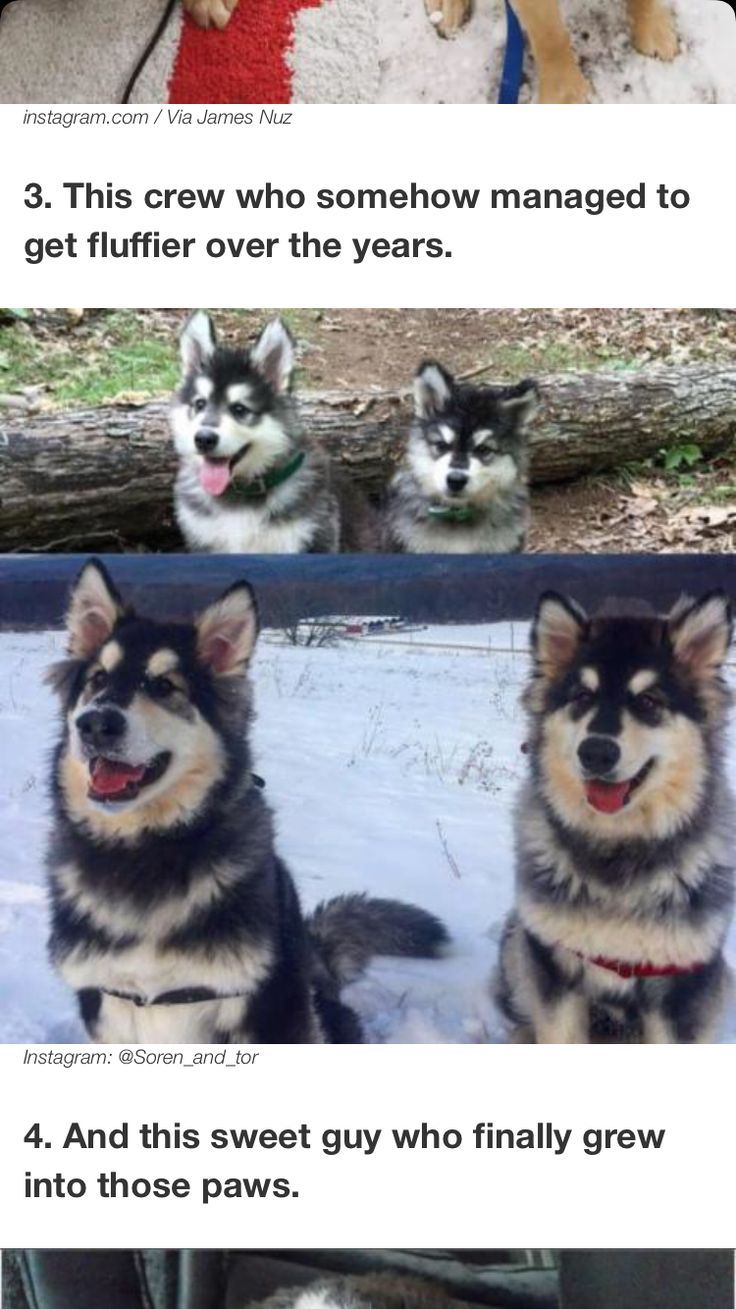 45 best dogs images on Pinterest | Amazing dogs, Animal tails and ...