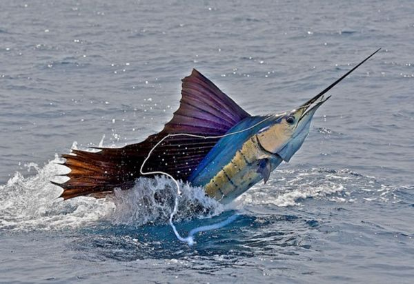 Nice. This would be amazing to see!! I want to go deep sea fishing so badly!