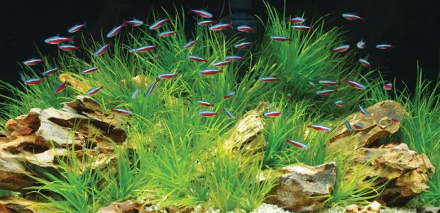 Eco-friendly Aquariums