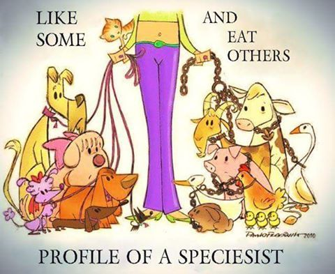 Animal lovers care about ALL animals.  Don't be a speciesist.  #speciesism #animalrights #govegan