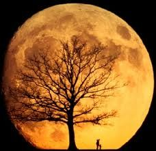 Harvest moon: Harvest Moon, Moon, Silhouette, Blue Green, Super Moon, Full Moon, Supermoon, Moon Moon, The Moon