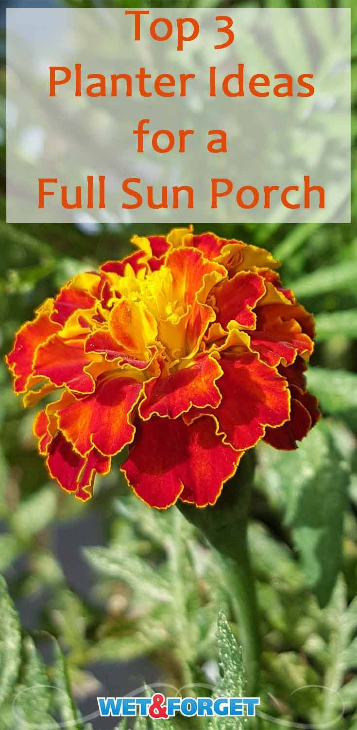 Best Porch Planter Ideas Flowers For Sun And Shade Full Sun