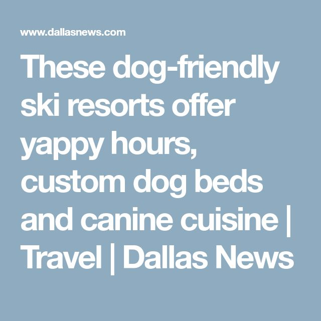 These dog-friendly ski resorts offer yappy hours, custom dog beds and canine cuisine | Travel | Dallas News