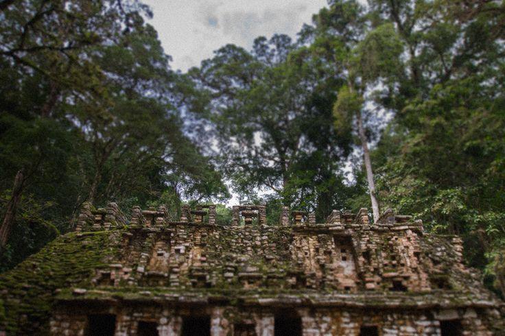 Yaxchilan, ancient maya city in Chiapas #josafatdelatoba #cabophotographer #chiapas #landscapephotography #mexico #yaxchilan #maya