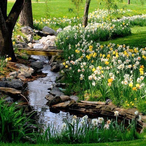 "Imagine having this in your own backyard?  ""For oft, when on my couch I lie In vacant or in pensive mood, They flash upon that inward eye Which is the bliss of solitude; And then my heart with pleasure fills, And dances with the Daffodils"".  (Last stanza of ""I Wandered Lonely As A Cloud"") ~William Wordsworth, English Poet, 1770–1850."