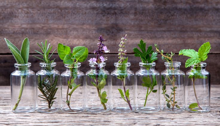 10 Herbs You Can Grow Indoors in Water All Year Long (www.ChefBrandy.com)