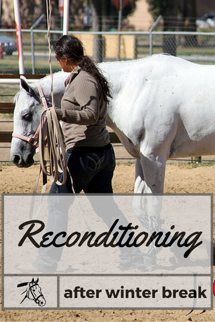 Get your horse back in shape after the winter off. Tips on how to slowly recondition your horse and get him show ready!