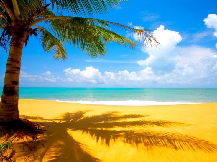 palm tree at the beach