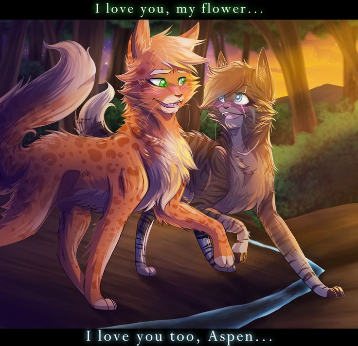 1171 Best Images About Warrior Cats On Pinterest