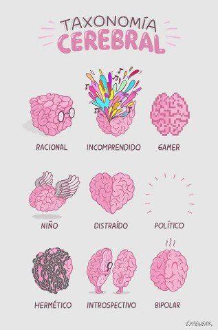 ¿Y qué tipo de cerebro tienes tú? #gimnasia #cerebral #brain #gym #cerebro Recuerda que tenemos más curiosidades y datos interesantes sobre el cerebro en: http://tugimnasiacerebral.com/ejercicios-de-gimnasia-cerebral/infografias-entrenar-la-mente-mejorar-la-memoria y en nuestro Facebook: https://www.facebook.com/tugimnasiacerebral