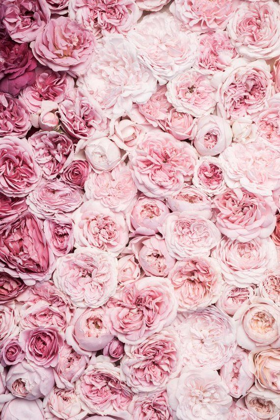 Rose Photography – Bed of Roses II, Floral Still Life, Botanical Photograph, Nature Photography, Large Wall Art, Romantic Home Decor