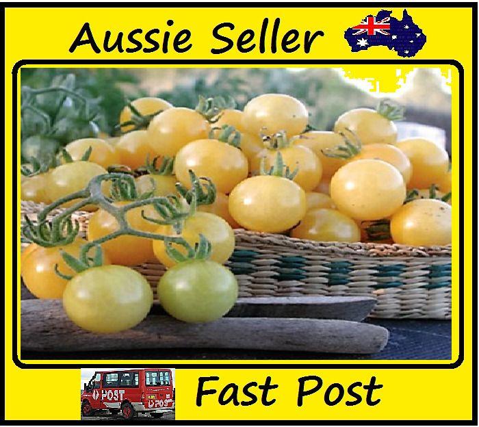 White Cherry Tomato Seeds Mini Tomato All Season Easy Grow Garden 100 Seed Lots