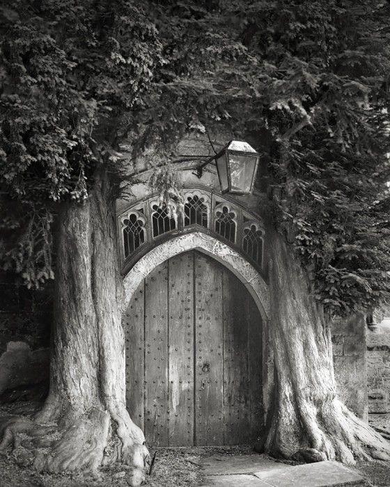 staroveke-stromy9